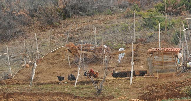 Şehirden köye dönüp çiftçilik yapıp tavuk beslemeye başladı