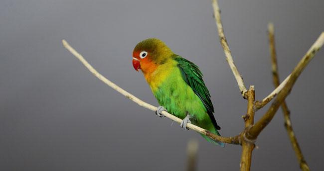 Konya Hayvanat Bahçesi'nin renkli kuşları
