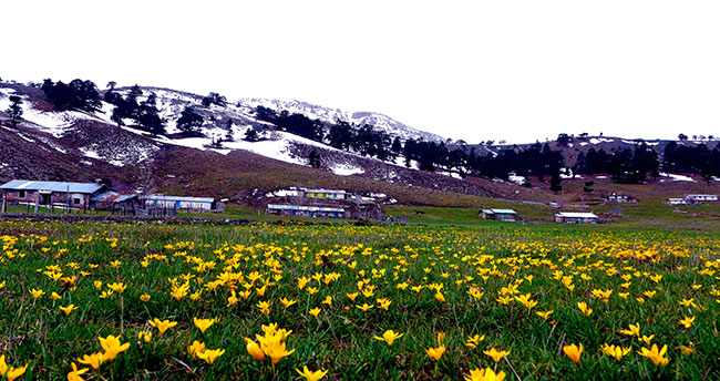 Toroslarda çiçeklerin görsel şöleni