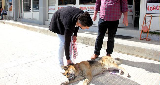 Yaralı bulduğu köpeği tedavi ettirdi