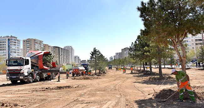Konya'da nakledilen ağaçlar bu parkta yeşeriyor