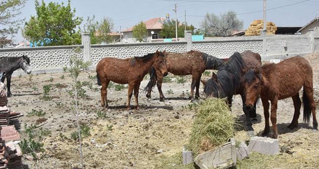 Atlar çevredeki çiftçilere dağıtıldı