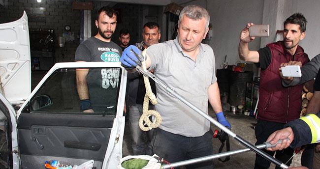 Konya-Karaman yolunda yılan paniği