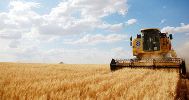 Buğdayın ton fiyatı 1050 liraya çıktı