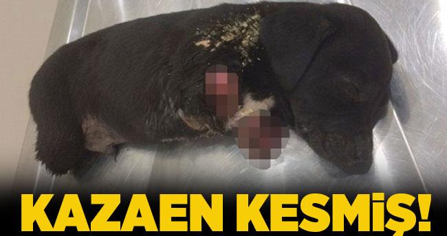 Yavru köpek vahşetinde kepçe operatörü gözaltına alındı