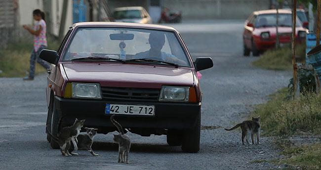 Mahallenin kedileri muhtar yolu bekliyor