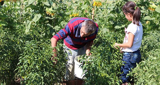 Karatay Hobi Bahçeleri'nde hasat zamanı