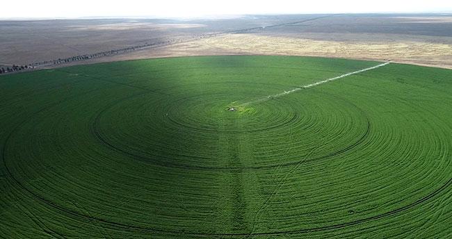 Ovadaki 66 futbol sahası büyüklüğündeki çember tarlaların sırrı