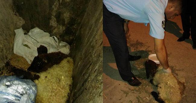 Çöp konteynerinde bulunan kuzuya belediye sahip çıktı
