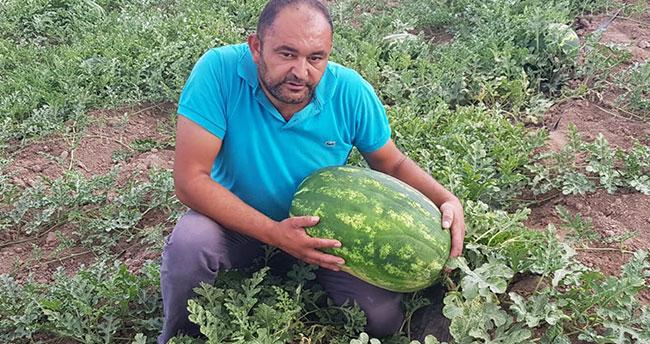 Tarlasında 30 kilogramlık karpuz yetiştirdi
