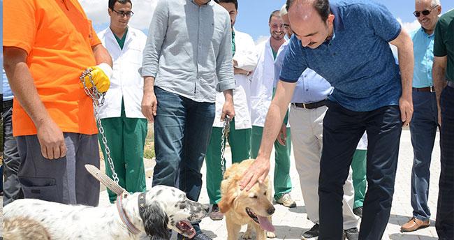Konya'da sokak hayvanları için kampanya!
