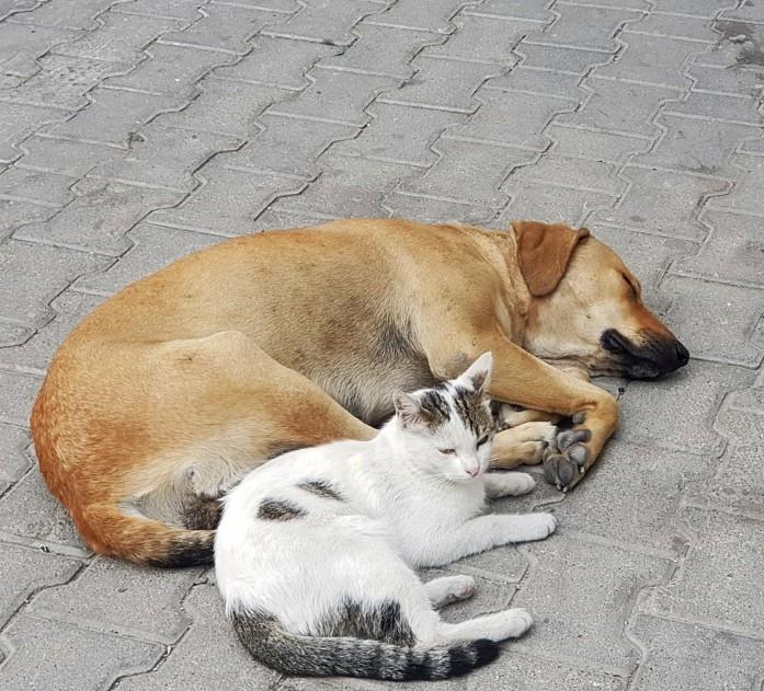 Kedi ile köpeğin dostluğu görenleri hayrete düşürüyor