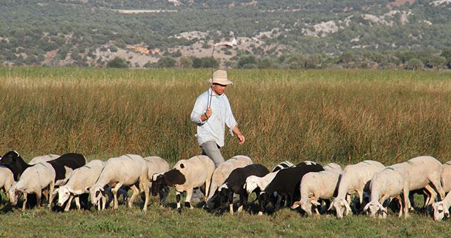 Konyalı üniversiteli çobanın okuma azmi