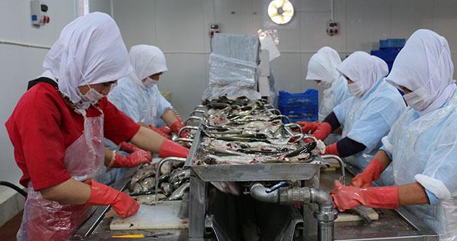 sudak balığı üretimi