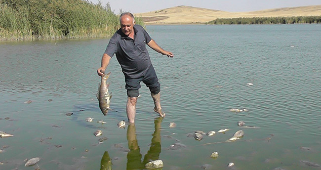 Gölde korkutan balık ölümleri!