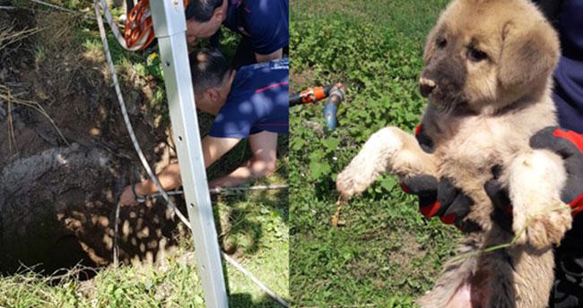 Konya'da kuyuya düşen yavru köpek kurtarıldı