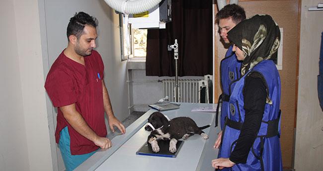 Selçuk Üniversitesinden Avrupa standartlarında ikinci hayvan hastanesi