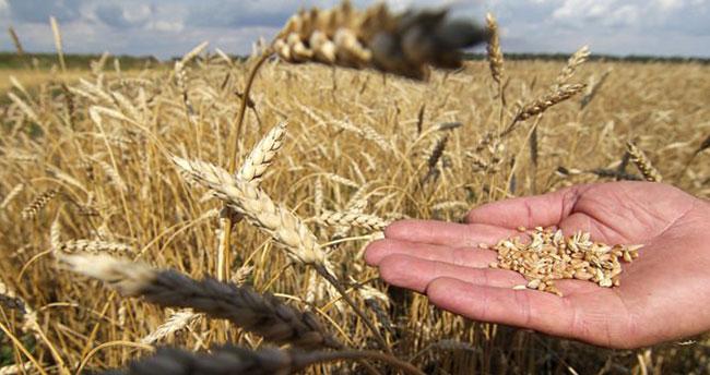 Bakanlıktan buğday stoku açıklaması