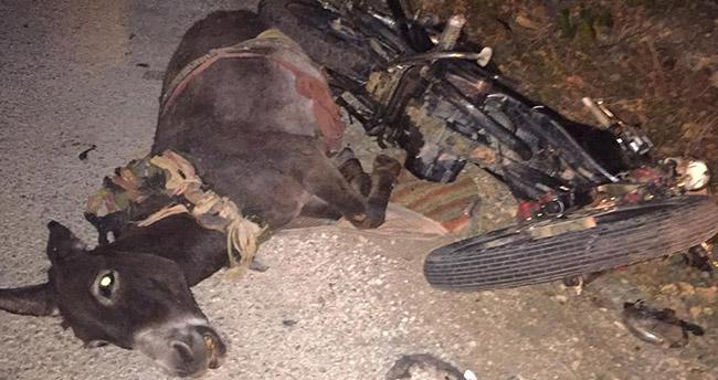 Beyşehir'de motosiklet eşeğe çarptı: 1 yaralı