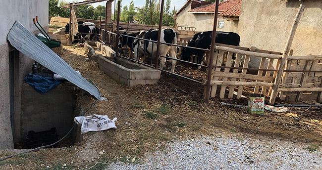 Konya'da süt sağma makinesinde elektrik akımına kapılan kadın öldü