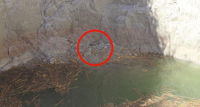 Obruğa düşen tilki kurtarıldı