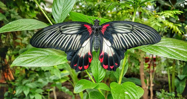 Konya Tropikal Kelebek Bahçesi'ne 1 milyon 500 bin ziyaretçi