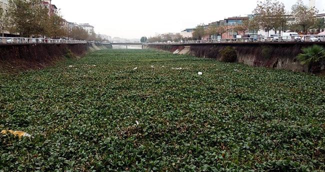 Su canavarları, Asi Nehri'ni kapladı