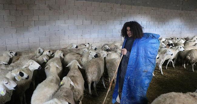 Üniversite mezunu ama çobanlık yapıyor