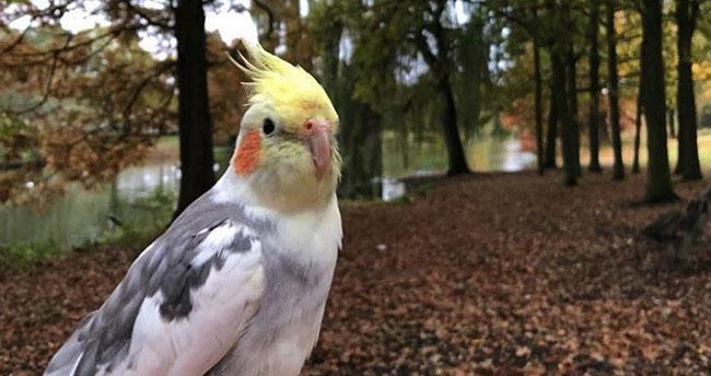 Türkiye sevdalısı gurbetçi papağanın şaşırtan repertuvarı