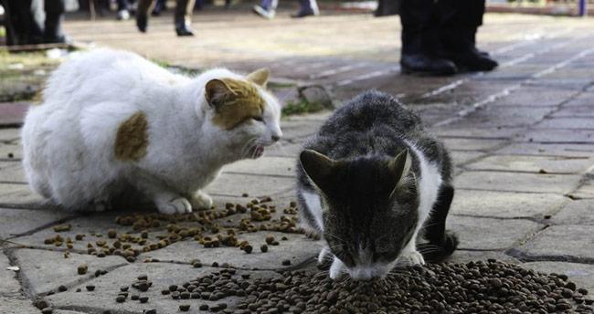 Konya'da bir kişi sokak kedilerine mama yardımıyla cezadan kurtuldu
