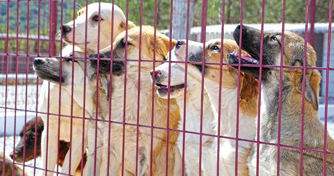 Seydişehir'de sokak hayvanlarına modern barınak