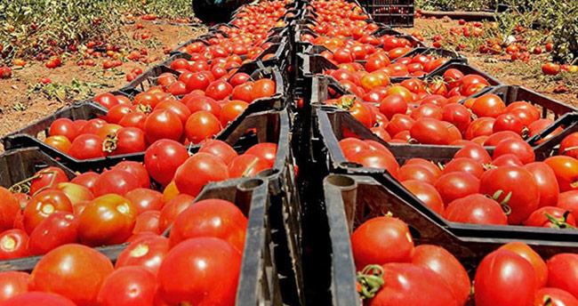 Ukrayna, 17 ton Türk domatesini ülkeye almadı