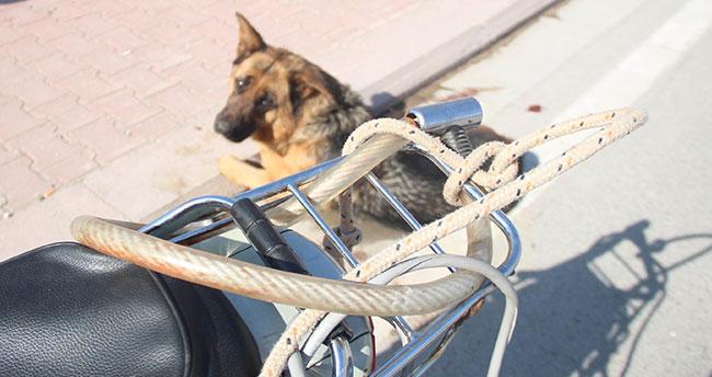 Burası Konya! Köpeği motosiklete bağlayıp sürüklediler