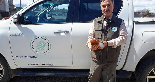 Konya'da hasta angut kuşu tedaviye alınıyor