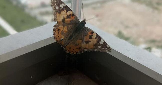 Konya'da kelebek istilası!