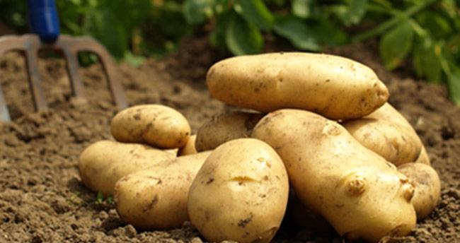 Patates ithalatında sıfır gümrük uygulaması uzatıldı