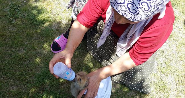 Bitkin halde bulunan yavru tilkiyi biberonla beslediler