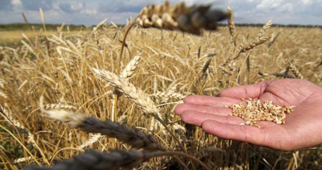 Bu yıl 20-21 milyon ton buğday rekoltesi bekleniyor