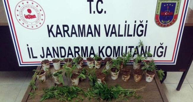 Jandarma ormanlık alana ekilmiş kenevir ele geçirdi