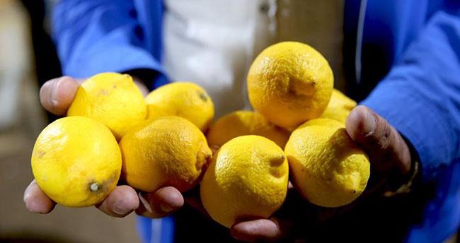 Limon fiyatları yükseliyor!