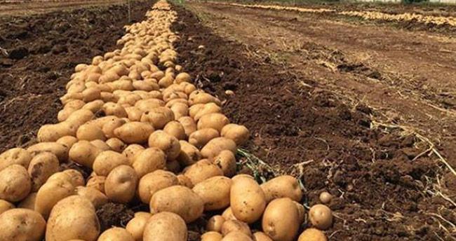 Patates üretiminde Konya ikinci oldu