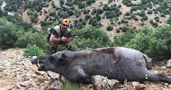 Karaman'da yaban domuzu sürek avı