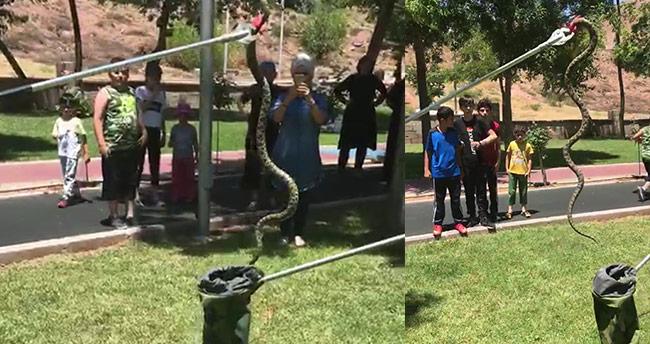 Korkutan yılan yakalanarak doğal ortamına bırakıldı