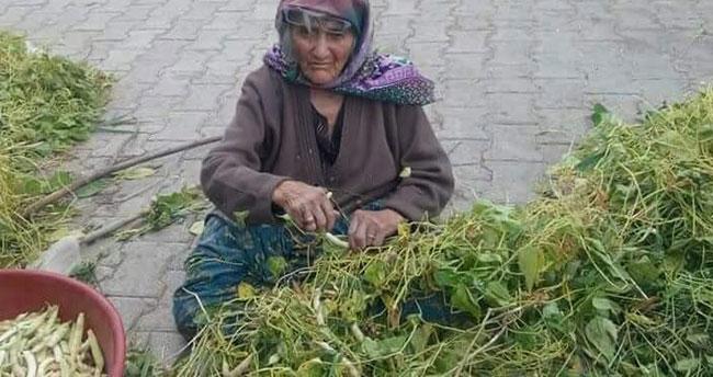 Beyşehir'in Akçabelen Çetmi Şeker Fasulyesi coğrafi işaret aldı