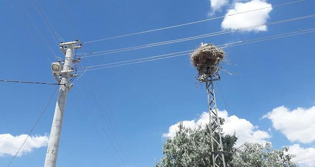 Demir elektrik direği leyleklere yuva olarak bırakıldı