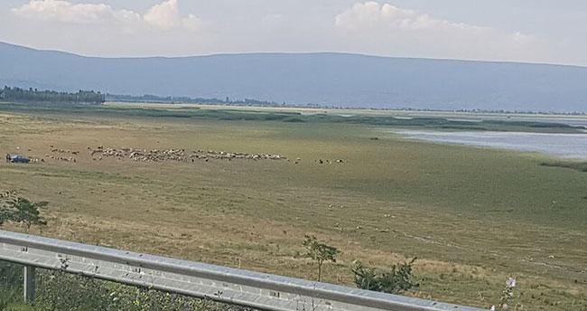 Konya'da göl suyu çekildi, yerini koyun sürüleri aldı