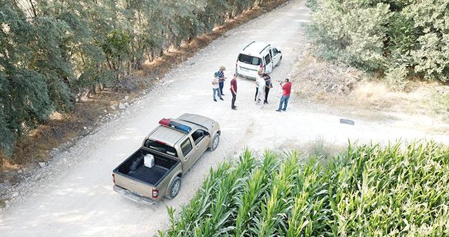 Konya'da polisten droneli Hint keneviri operasyonu: Yine mısır tarlası…