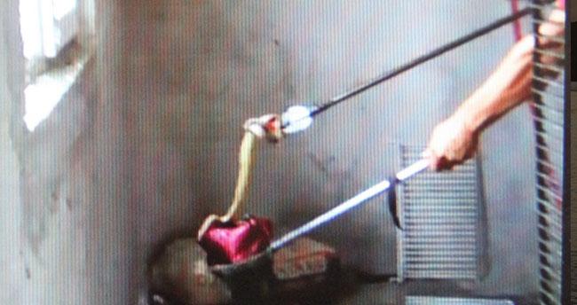 Konya'da korku dolu anlar! Eve giren yılanı itfaiye ekipleri çıkardı