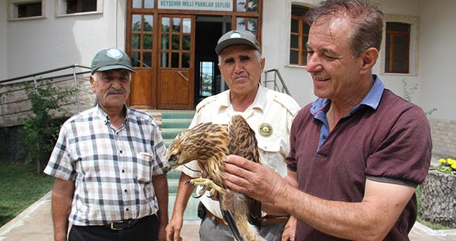 Konya'da köpeklerin saldırısından kurtarılan şahin koruma altına alındı