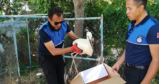 Konya'da yaralı leylek koruma altına alındı